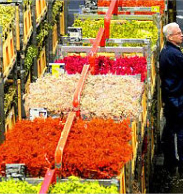 Dutch Flower Exports, World's Biggest, Slip 2.3% on Slow Economy. – Greenworks