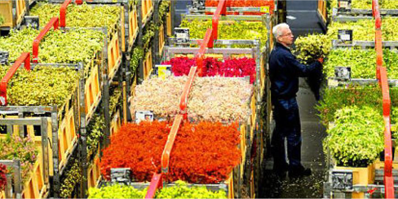 Dutch Flower Exports, World's Biggest, Slip 2.3% on Slow Economy. – Greenworks