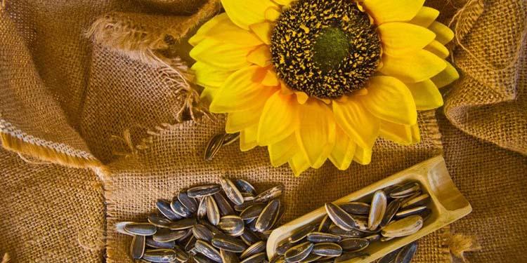 flower-seeds.jpg