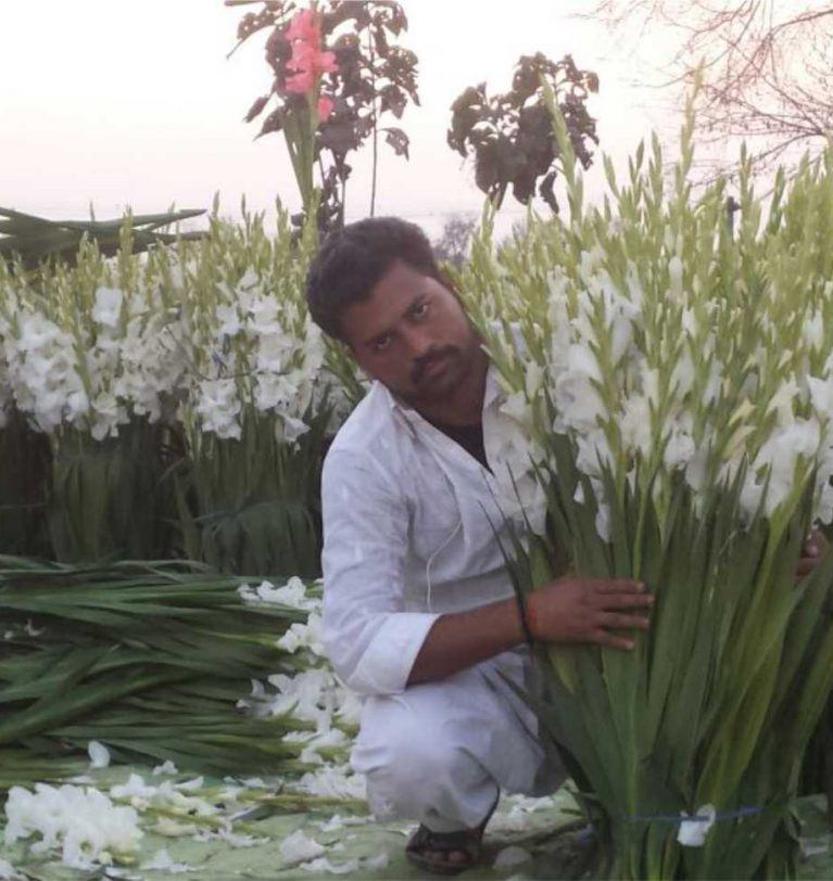 Gladiolus Cultivation in Pakistan – Greenworks