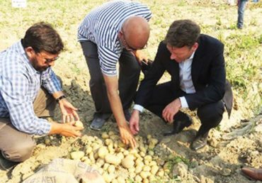 Consider The Salt-Tolerant Potato – Greenworks
