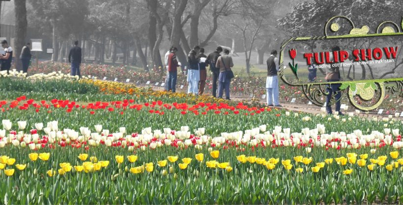 Breaking cut flowers myths in Pakistan – Greenworks