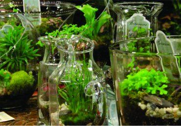 Miniature Gardening – Greenworks