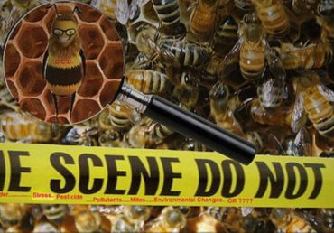Pesticides killing off more bees in USA ! – Greenworks