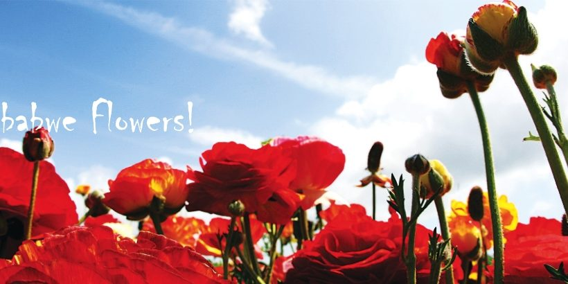 Flower exports gross US $11M in Zimbabwe – Greenworks