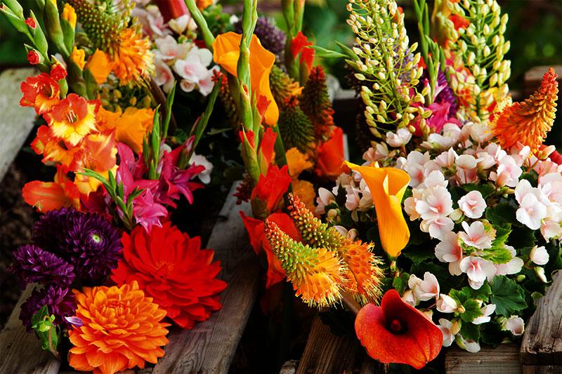 summer-flower-bulbs.jpg
