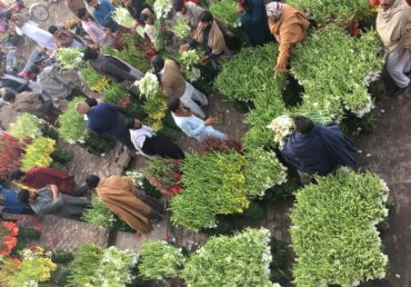 State of Floriculture in Pakistan and future horizon