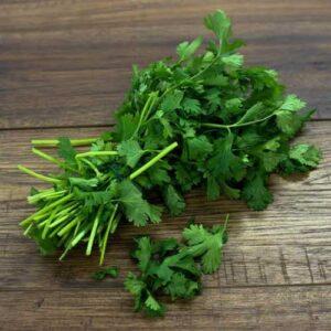 coriander-hybrid-f1-seeds-greenworks-Pakistan