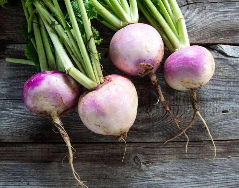 turnip-purple-top-f1-greenworks-Pakistan