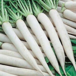 radish-mino-early-greenworks-Pakistan