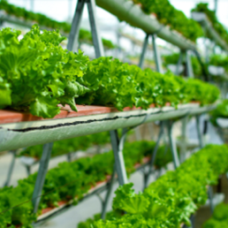 Vertical farming will disrupt food production