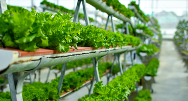 salads on vertical farming techniques