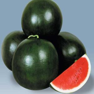 greenworks-watermelons-seeds-Pakistan