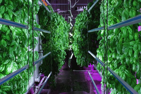 """Netherlands offers """"vertical farming"""""""