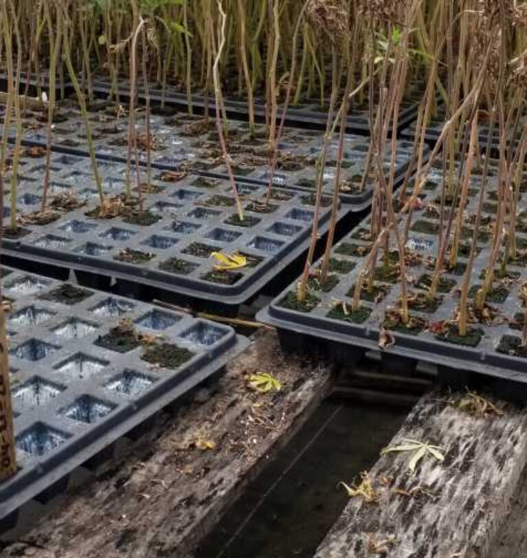 Keeping your greenhouse pathogen-free