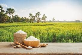 Basmati body calls for boosting rice exports to $5b